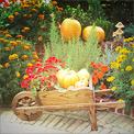Dom, ogród, ogród warzywny